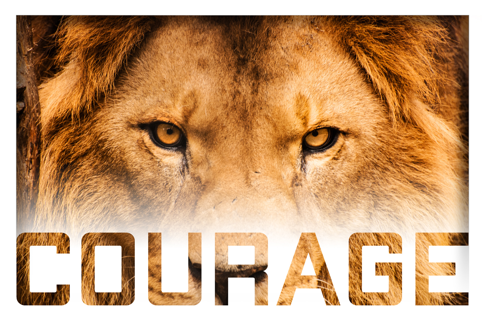 Courage PK Events in August